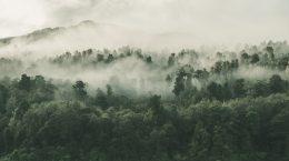 Photo by Tobias Tullius on Unsplash